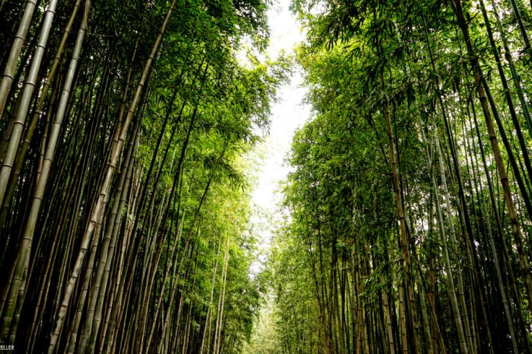 DAMYANG BAMBOO FOREST ONE TECH TRAVELLER TALL WM